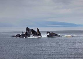 Humpback Whales 3D Szenenbild 5