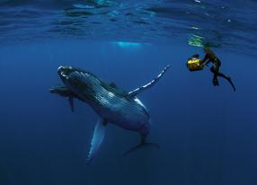 Humpback Whales 3D Szenenbild 7