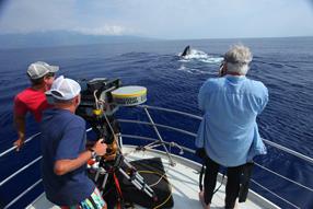 Humpback Whales 3D Szenenbild 10