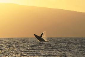 Humpback Whales 3D Szenenbild 11