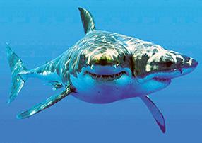 Shark Box XXL Szenenbild 1