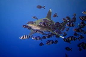 Ocean Giants 3D Szenenbild 1