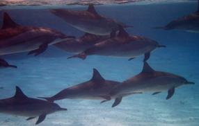 Ocean Giants 3D Szenenbild 3