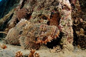 Ocean Giants 3D Szenenbild 4